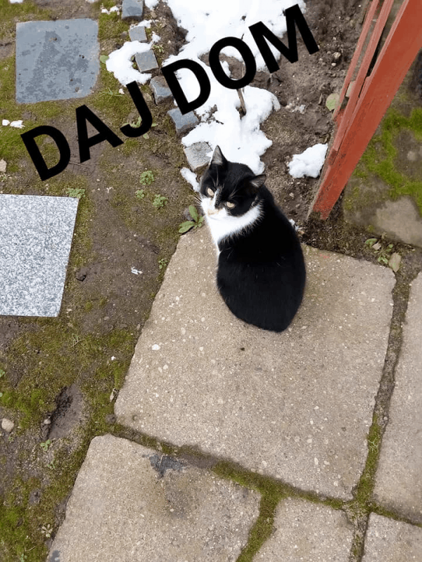 Kot z działek